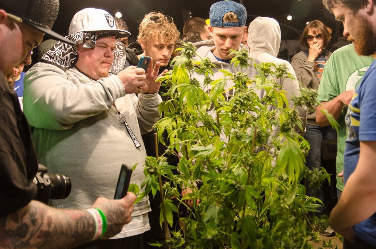 Фестивале марихуаны в амстердаме как вырастить коноплю фильм скачать