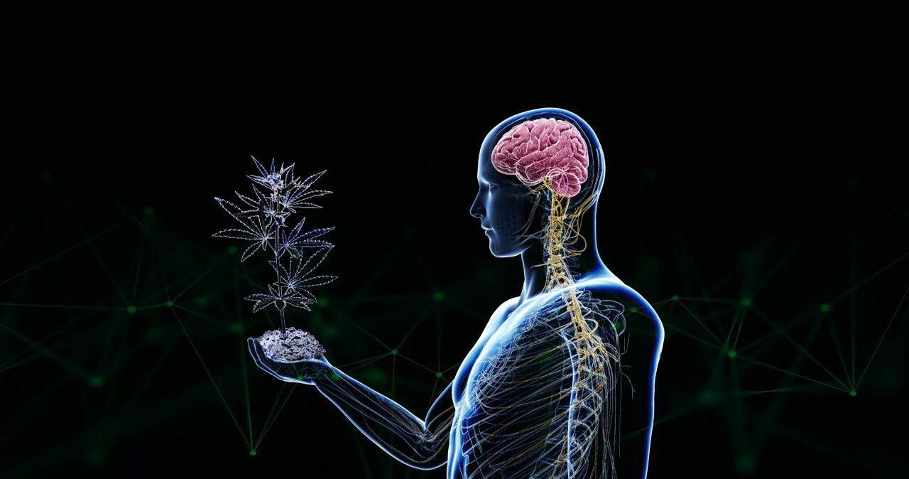 Конопли мозг после как восстановить и конопля д витамин