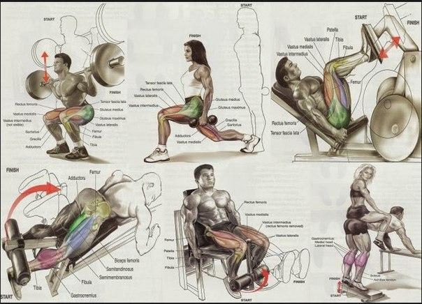 все упражнения для всех групп мышц в картинках