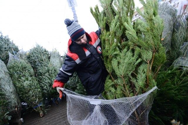 В Хабаровске скоро начнётся торговля новогодними елками