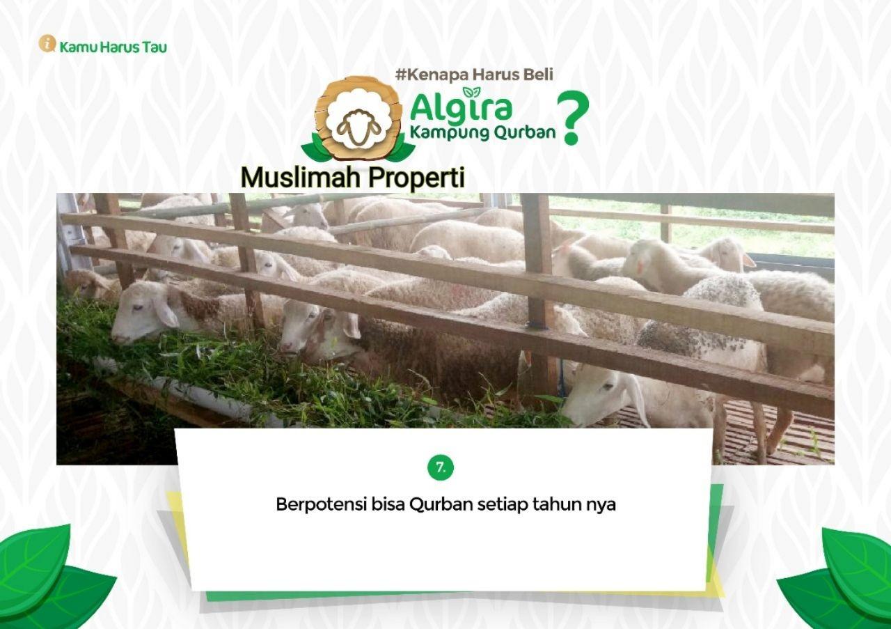Algira Kampung Qurban Tahap 2 12