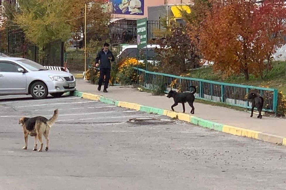 «Капканы» для собак устанавливают на улицах Хабаровска