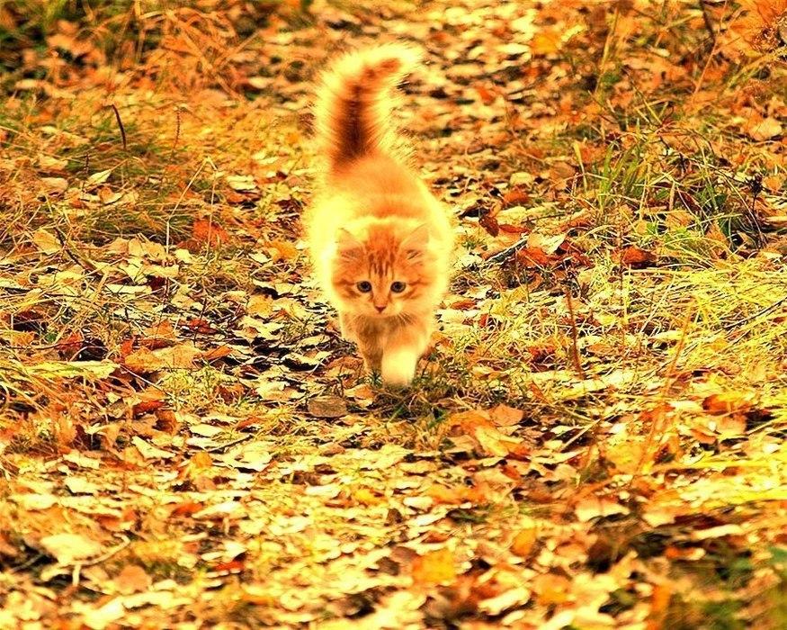 Прикольные картинки вот и осень пришла с надписями