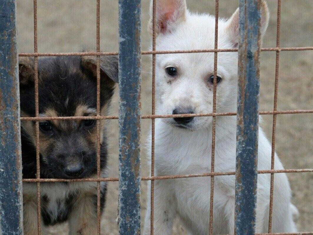 На отлов безнадзорных животных направят свыше 7 млн рублей