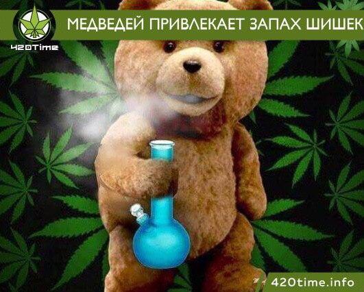 Прикол медведи и марихуана вредители на конопле