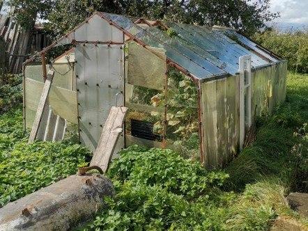 337 кустов конопли обнаружили в теплице под Хабаровском
