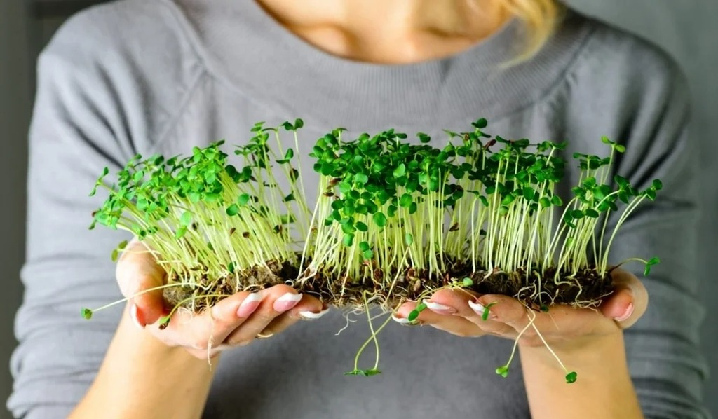 Микрозелень для макробизнеса: успех фабрики здоровья Sunfood