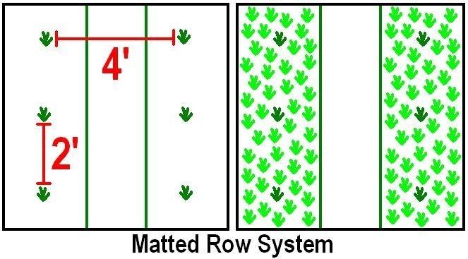 Система посадки матовых рядов