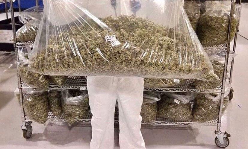 Транспортировка марихуану фотографии марихуана