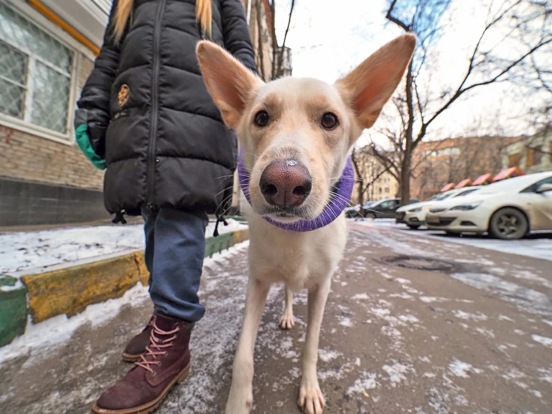 Штраф 150 тысяч рублей за жестокое обращение с животными вводят в России