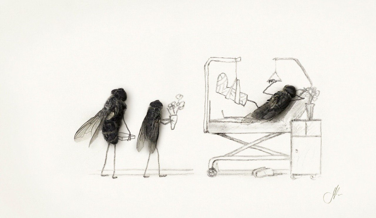 Елка своими, яндекс картинки смешные мухи нарисованные