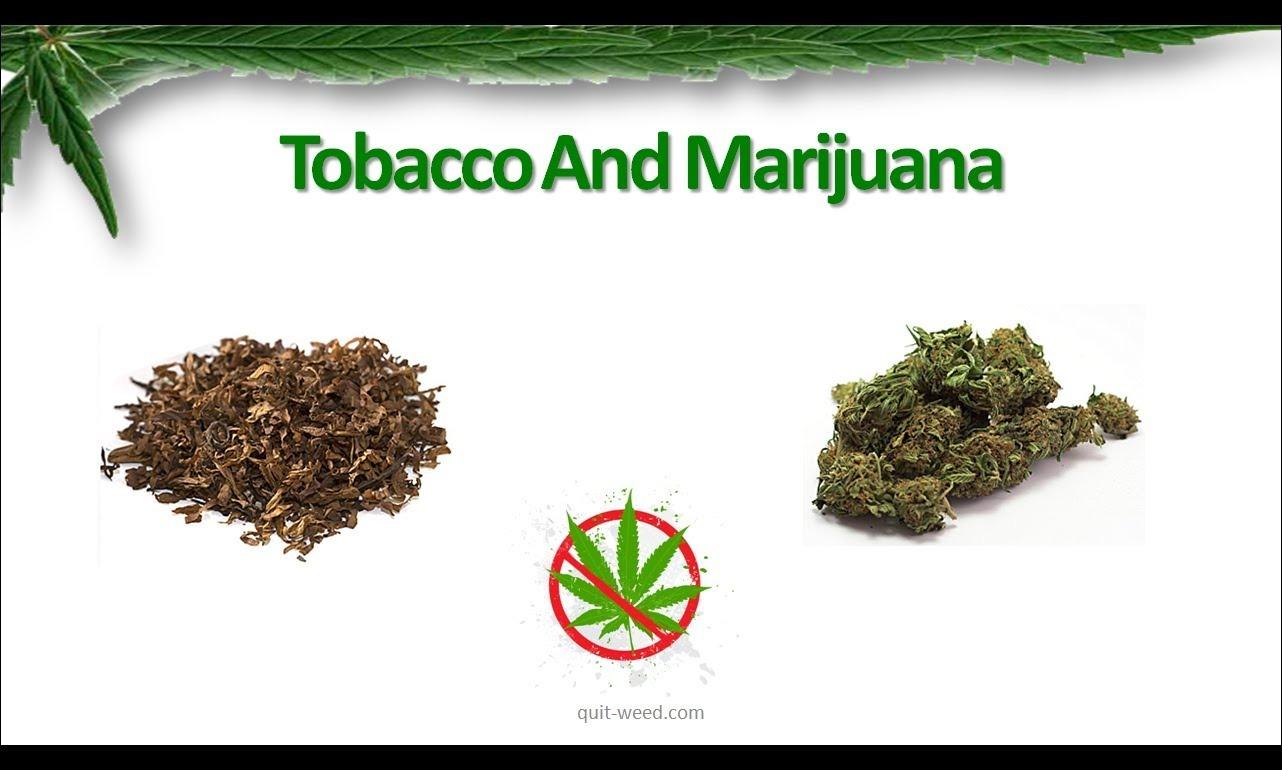 Конопля или табак что хуже марихуана головные боли