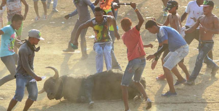 Lincharon hasta la muerte a un toro con botellas rotas y palos como diversión en Colombia