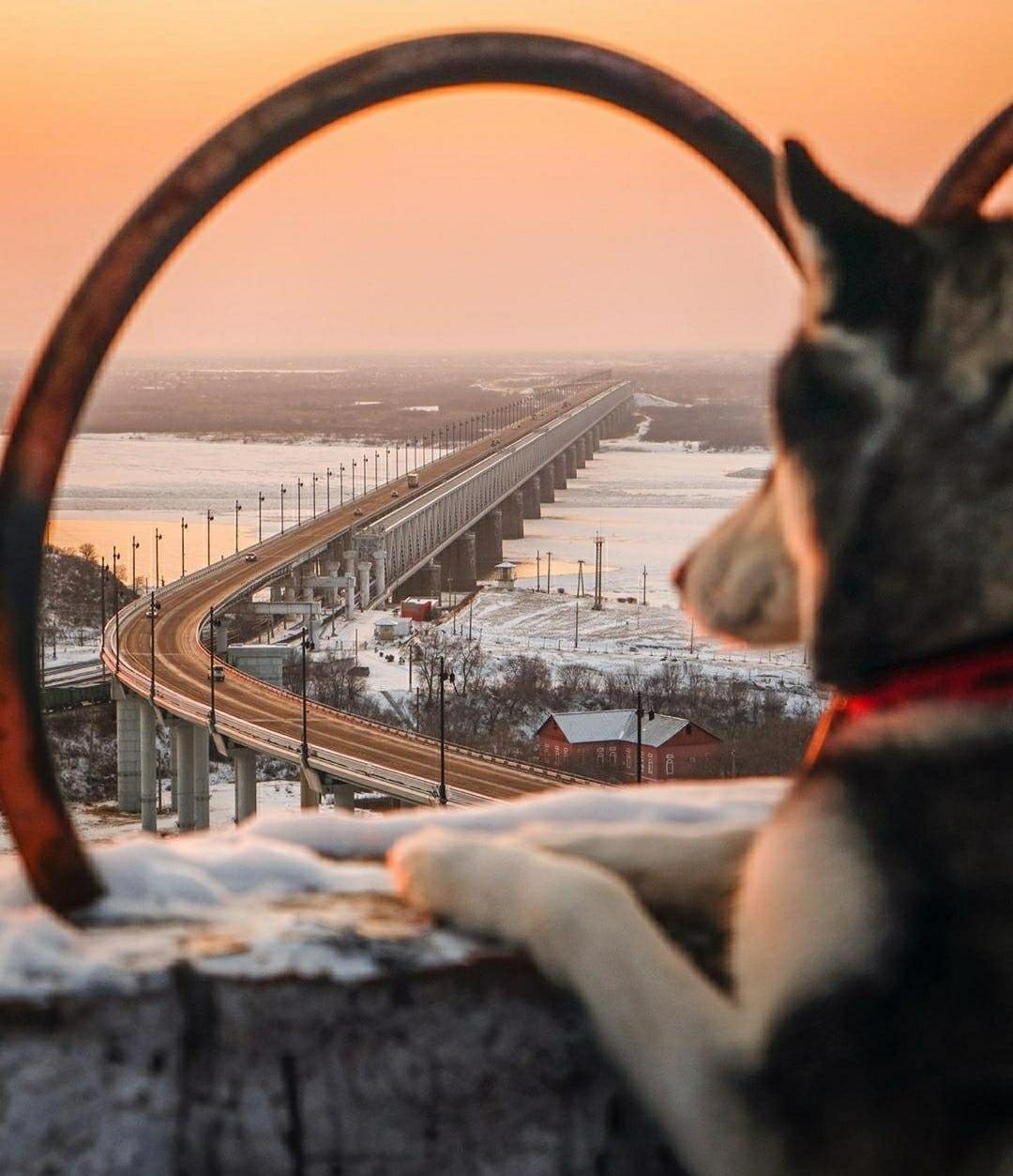 Ослабление карантинных ограничений в Хабаровском крае