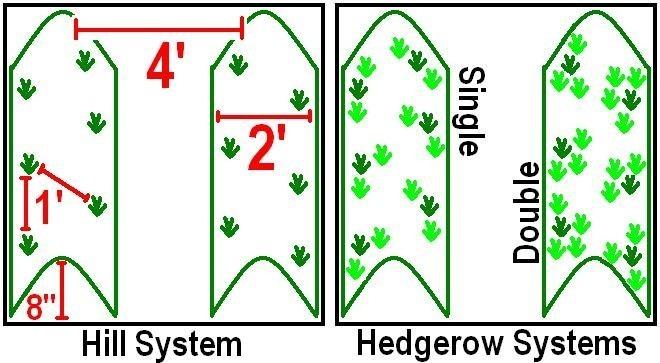 Система холма