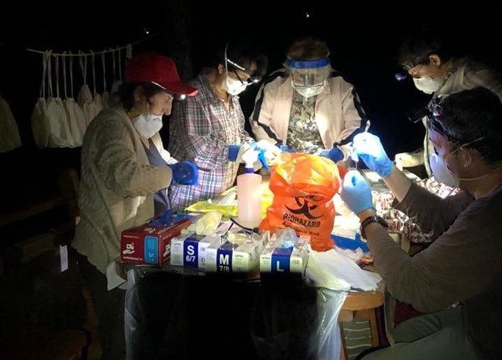 Пентагон разрабатывает биологическое оружие на базе коронавируса летучих мышей 5