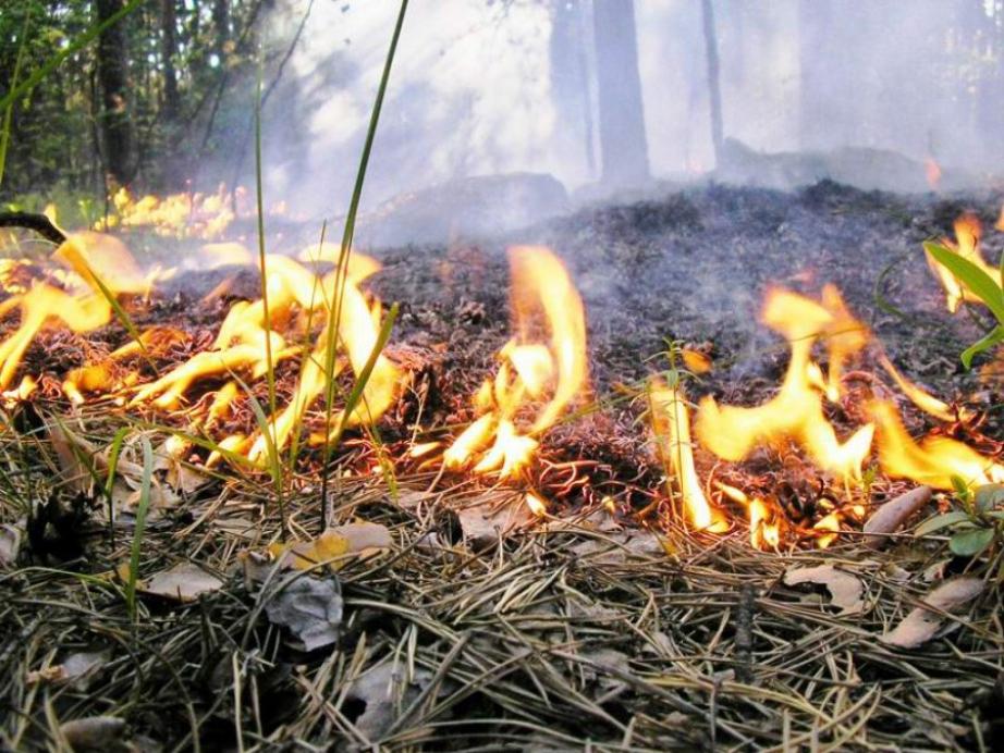 Осенний пожароопасный сезон объявили в Хабаровском крае