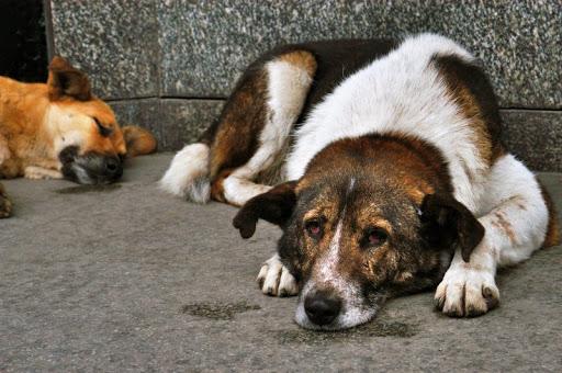 Хабаровский живодер ловит и ест собак