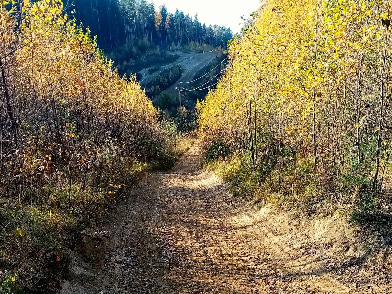 Колтушские высоты, 12 км, 17 октября - пойдем!!