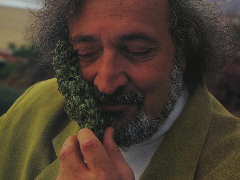 Джек и марихуана где разрешено курить марихуану