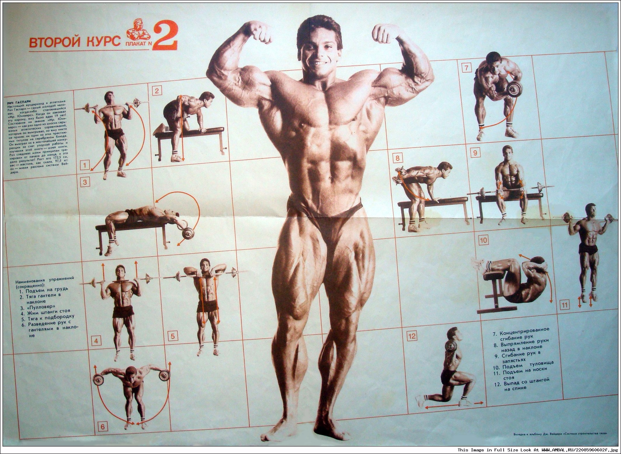 имено ракурсы упражнения для начинающих бодибилдеров в картинках крем для бисквитного