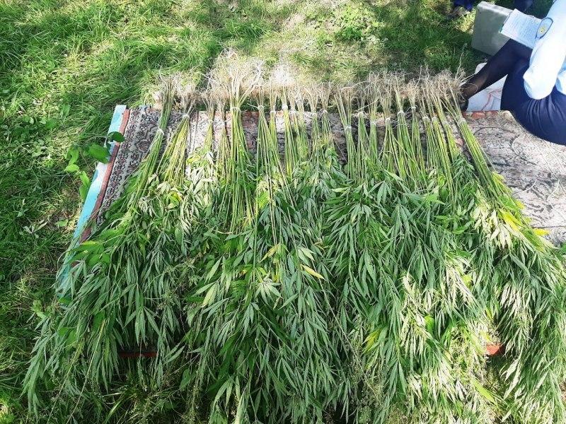 Более 73 кг наркотиков изъяли в Хабаровском крае