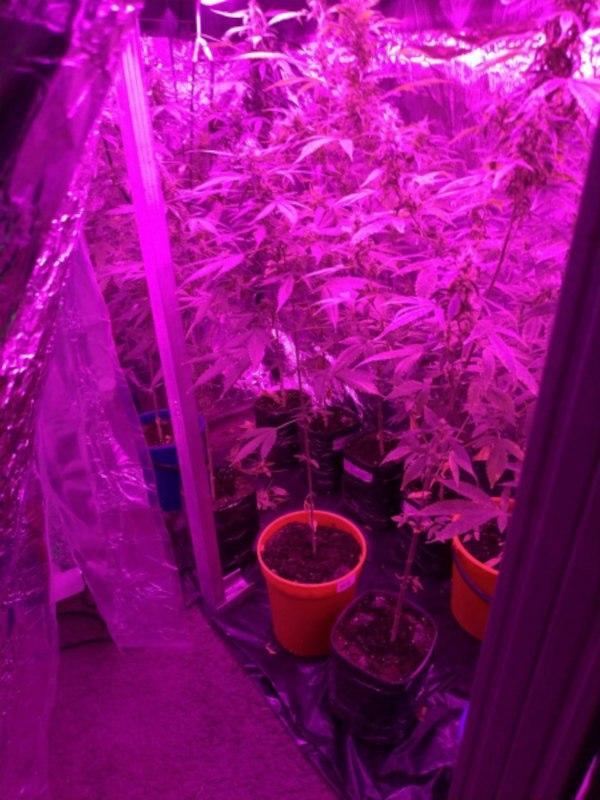 Мини-лабораторию по выращиванию конопли обнаружили в Хабаровске