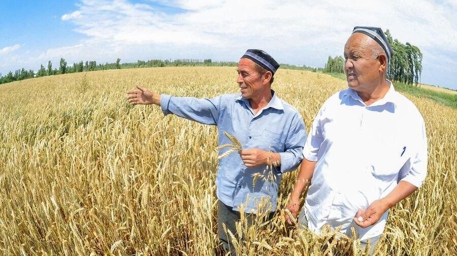 Узбекистан арендует у России 1 млн гектаров земли