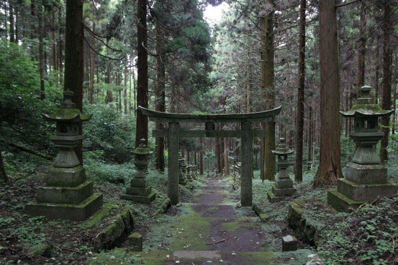 Ліс самогубців: де знаходитися наймоторошніше місце на землі