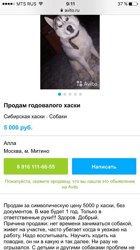 В Хабаровске полиция задержала подозреваемую в серии интернет-мошенничеств с продажей домашних животных