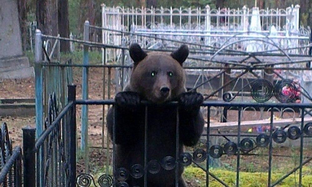 Медведя ищут в Хабаровске