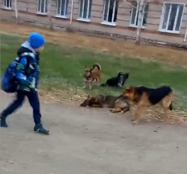 Стаи бездомных собак терроризируют жителей Хабаровска