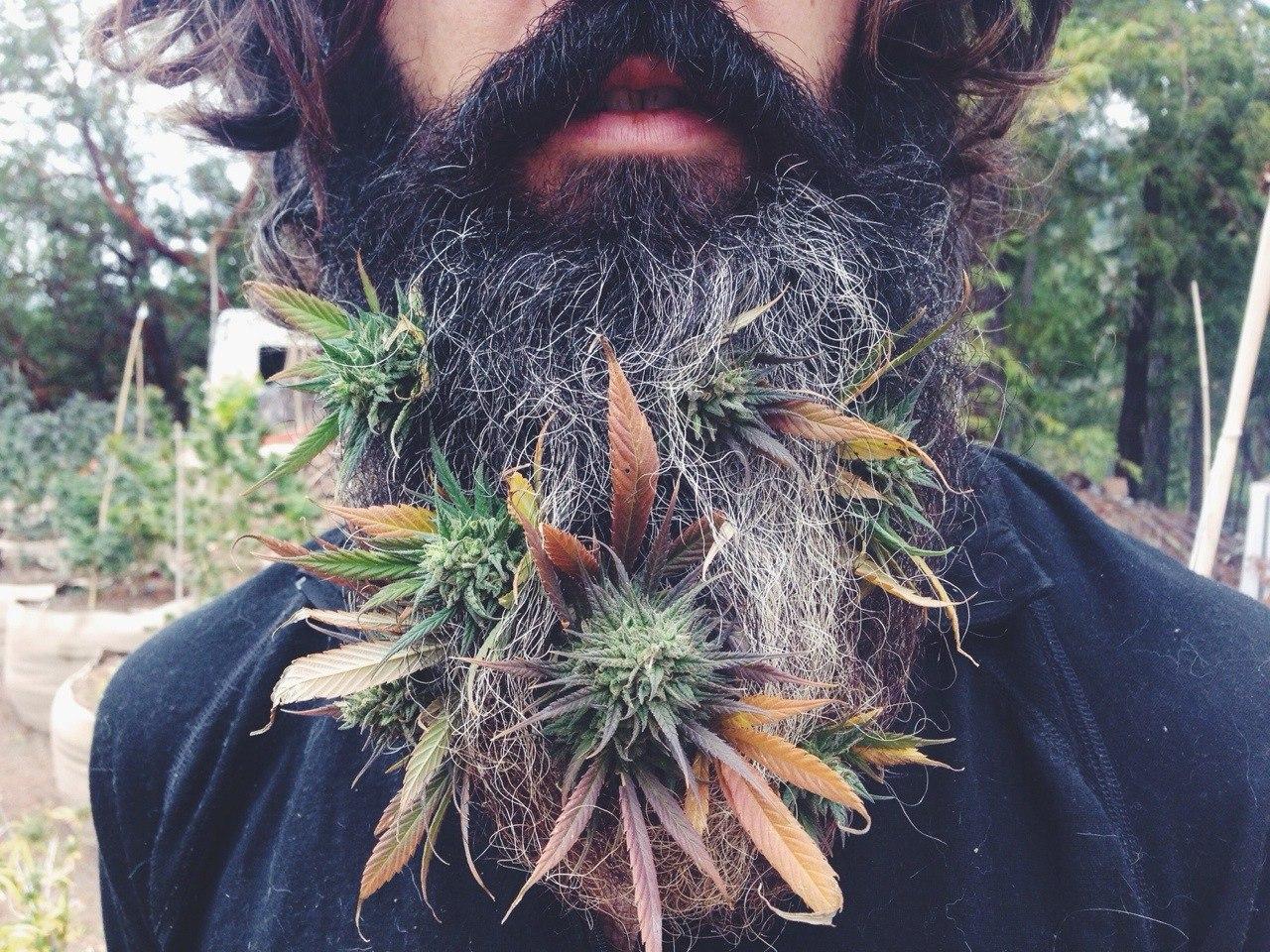 Марихуана прикольные фото марихуана пацан фото