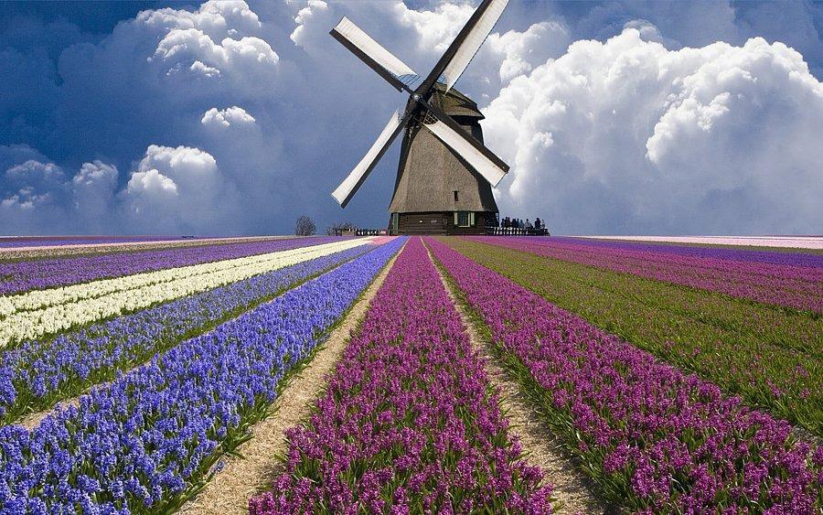 Голландия работа вакансии дом в море дубай