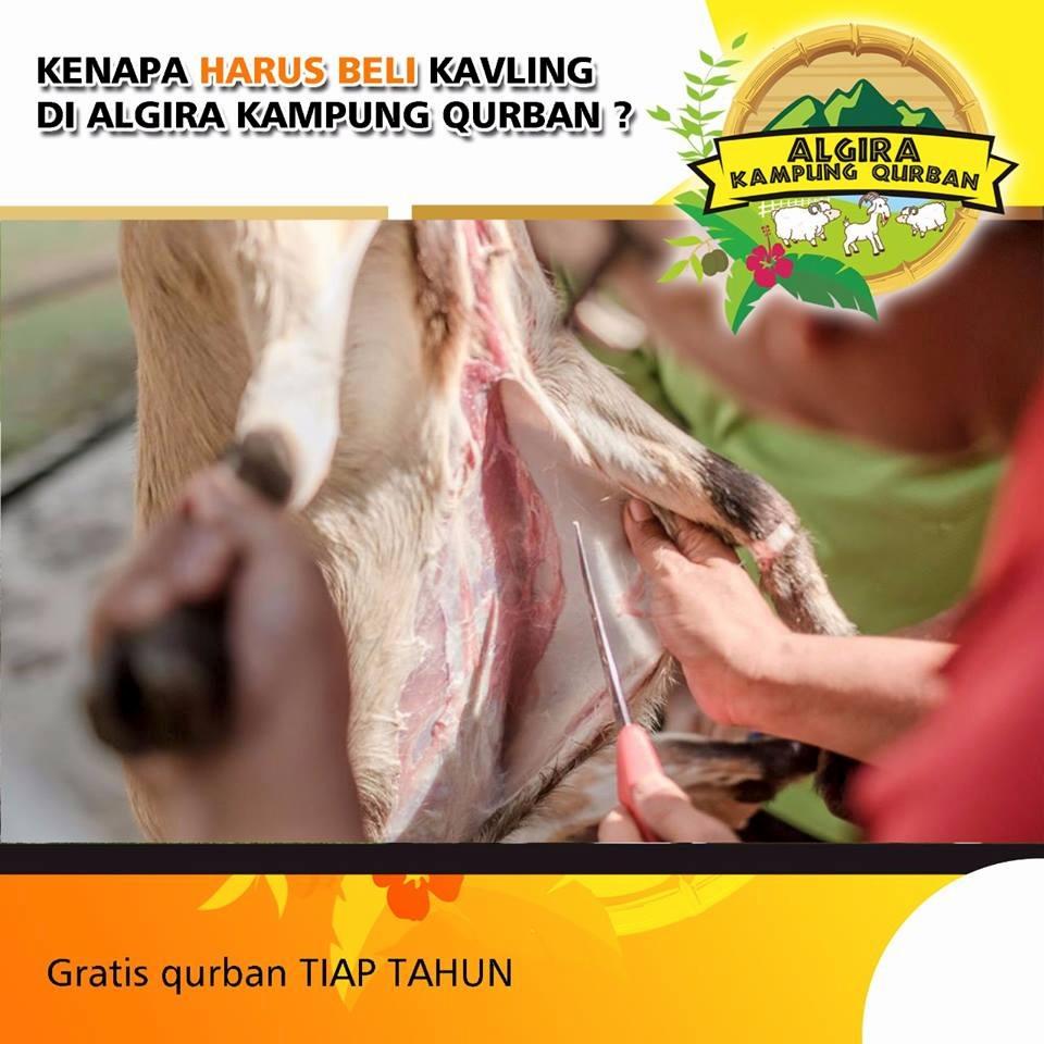 Algira Kampung Qurban Tahap 2 11