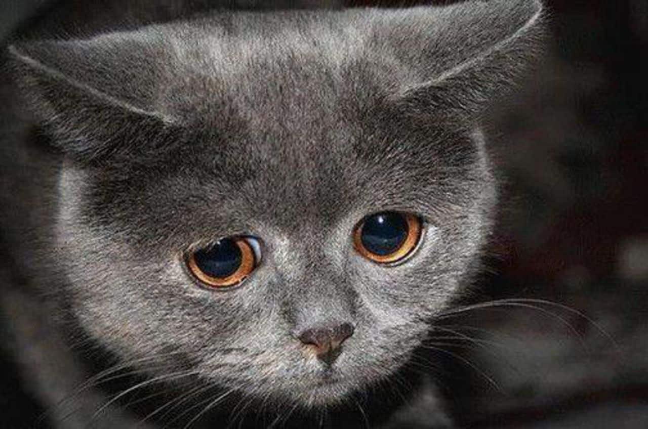 Днем, картинки про настроение грустное с надписями