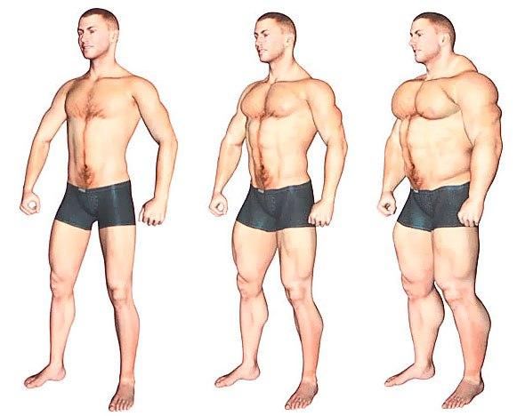 мезоморф с лишним весом