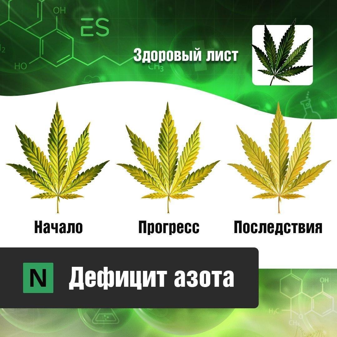 Частицы конопли не пахнущие сорта марихуаны