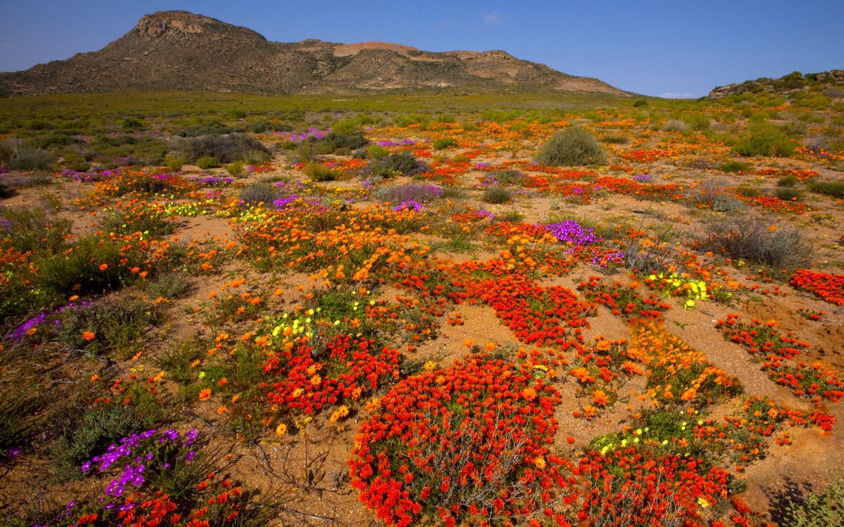 Весна в африке фото