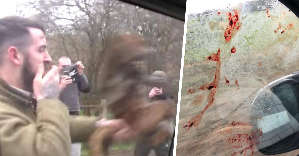 Cazador revienta a un zorro a golpes contra el coche de activistas animalistas