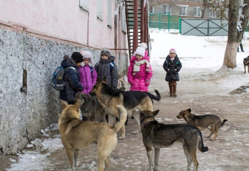 Стая бездомных собак терроризирует детей у хабаровской школы