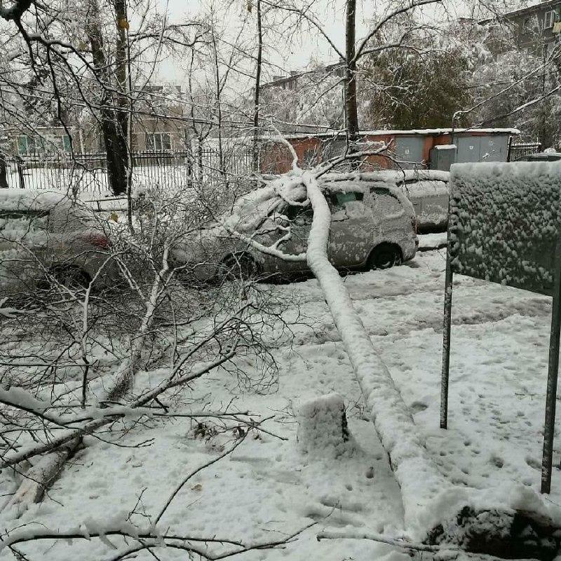 Мокрый снег, накрывший Хабаровск, задал работы службам благоустройства и энергетикам