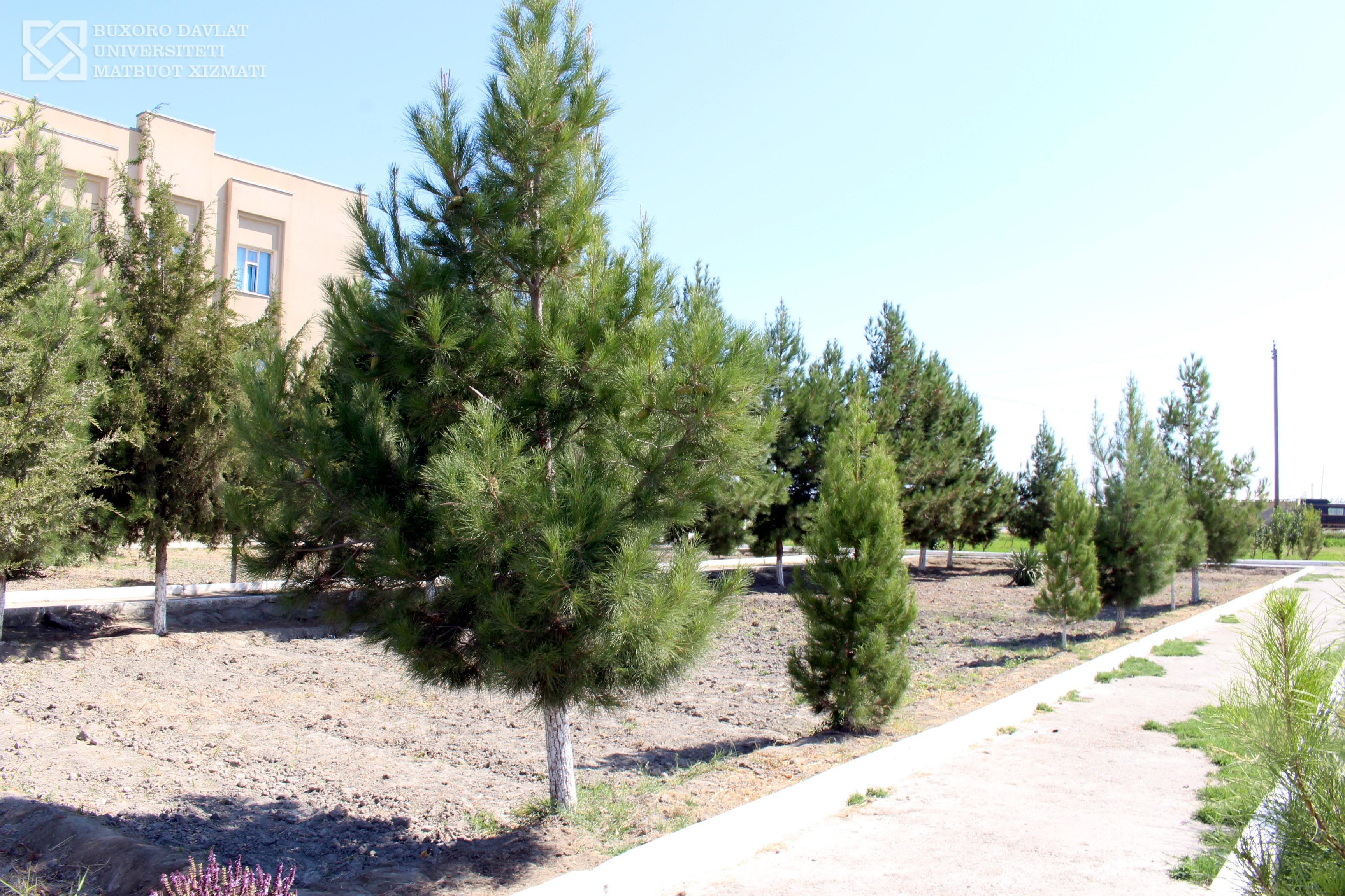 BDU-Buxoro davlat universiteti