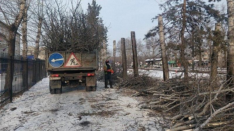 Озеленители начали с омолаживающей обрезки деревьев
