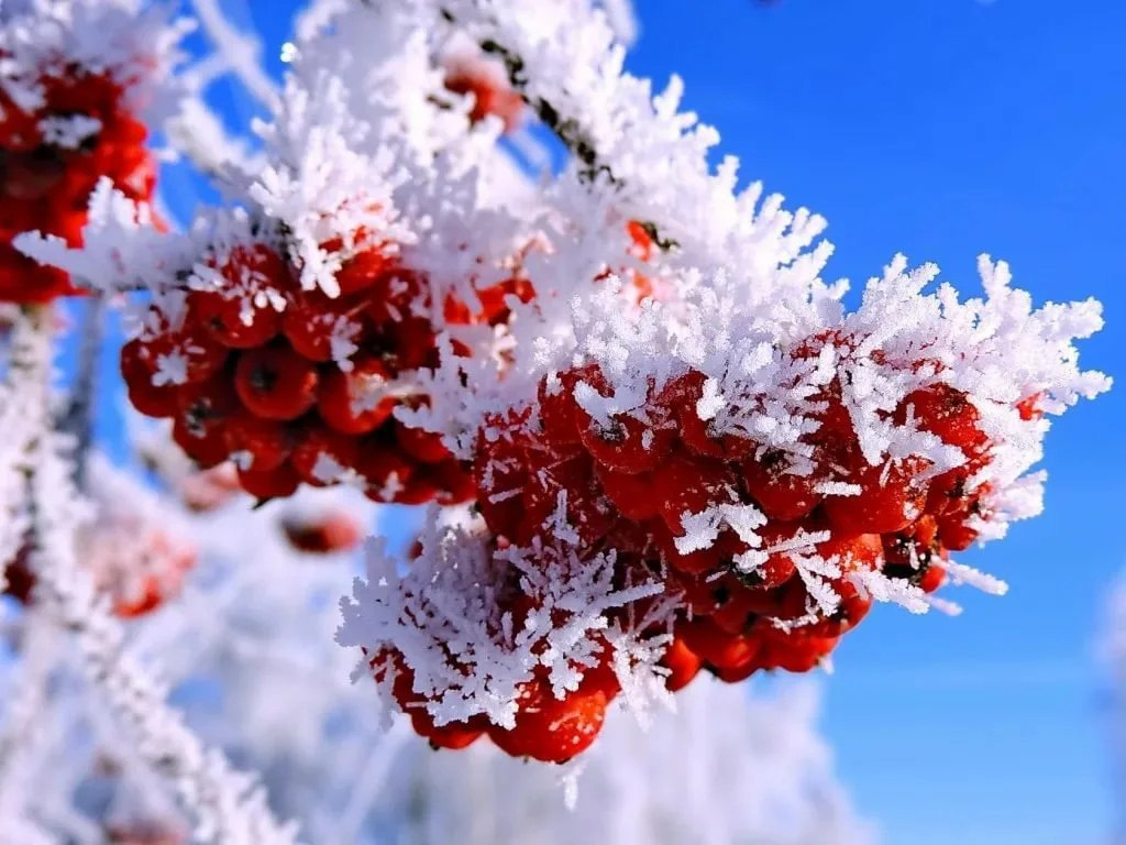 Ночью в Курской области прогнозируют до 17ºС мороза