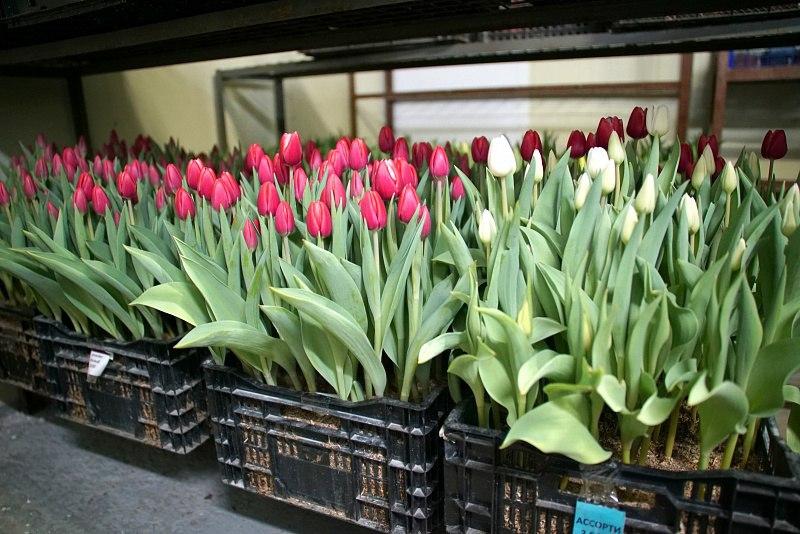 Хабаровские цветоводы готовятся к праздникам