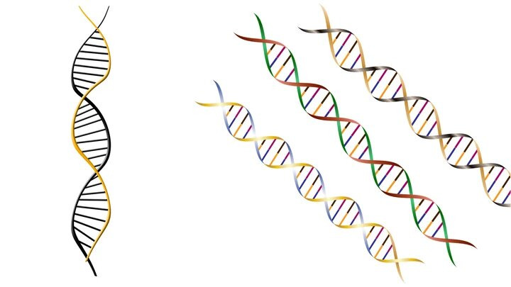 Know all About Magnetic Beads & Bst DNA polymerase and Its Advantages