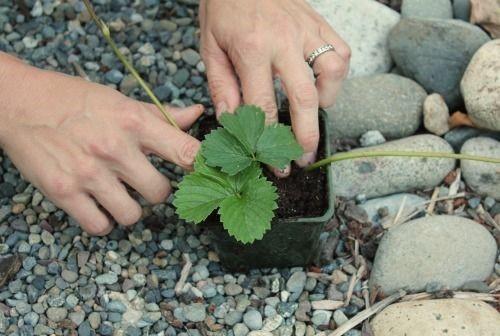 Выньте растение из контейнера