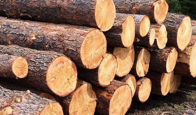 Более 3 млн кубометров леса вывезли зарубеж из Хабаровского края